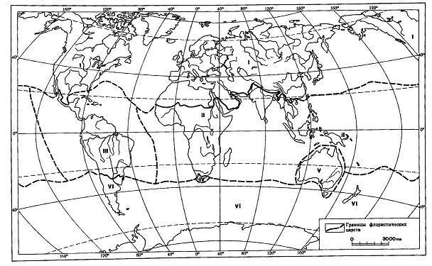 Австралийское флористическое царство реферат 2696