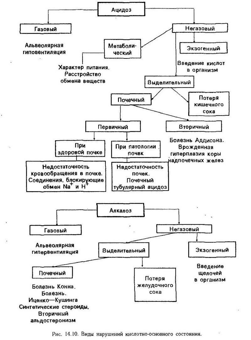 схема обмен веществ