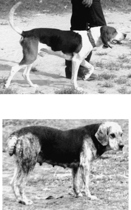 1966 International Dog Breeders Club Show Event Brno Schnauzer Breed Pin Badge