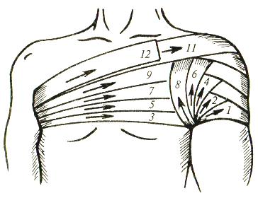 Колосовидную повязку на правый плечевой сустав на статисте вылечить артроз тазобедренного сустава 2 степени