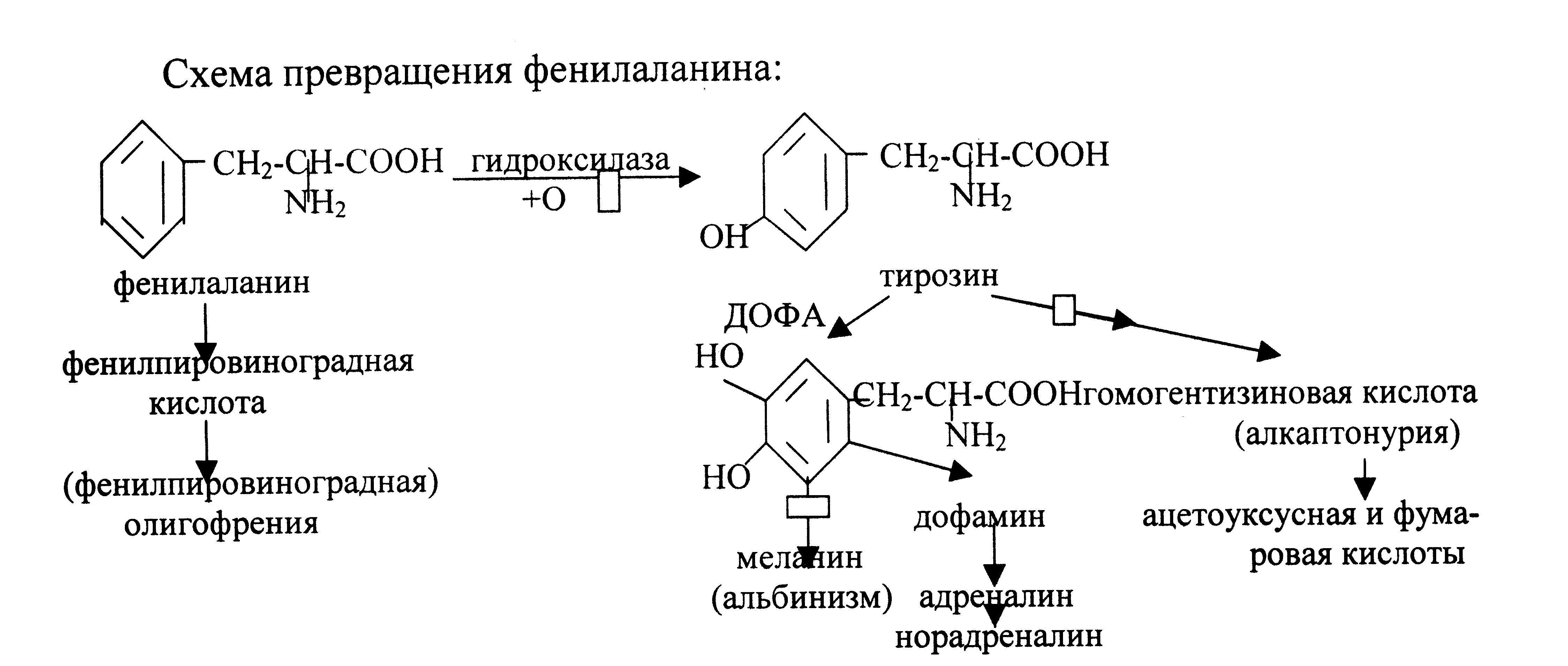 Фенилаланин для негров необходим