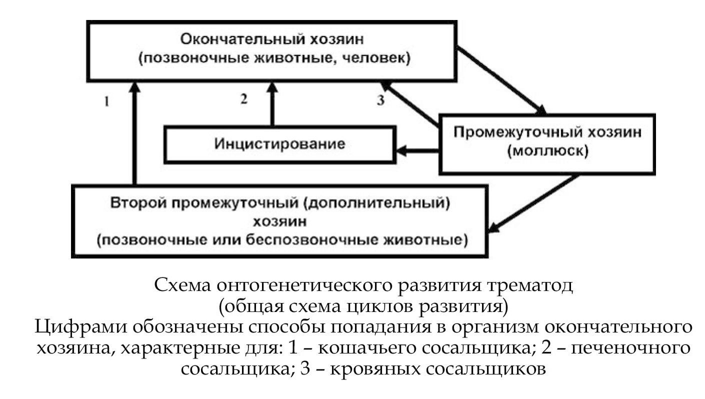 Схема цикл развития малярийного плазмодия фото 675