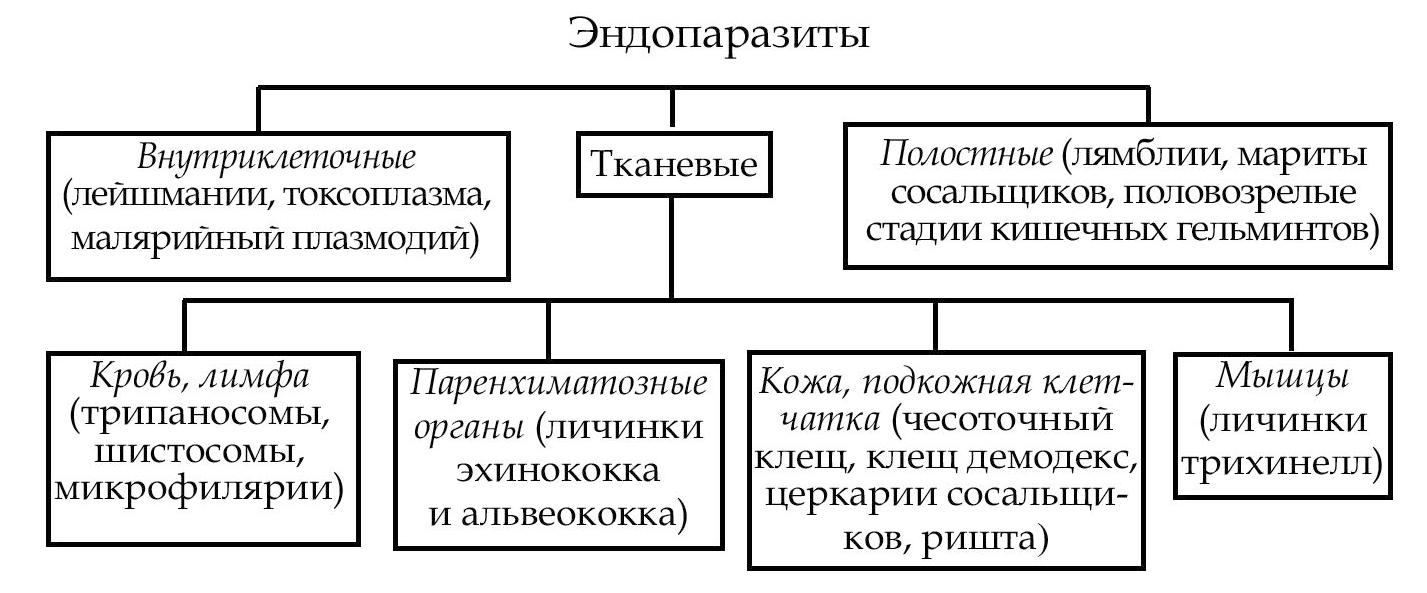Схема цикл развития малярийного плазмодия фото 487
