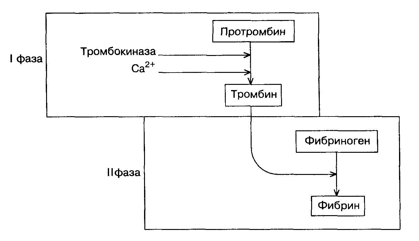 Регуляция процесса свертывания крови курсовая работа 3984