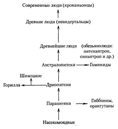 Хронология эволюции человека таблица