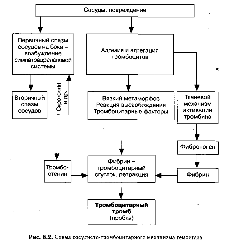 Регуляция процесса свертывания крови курсовая работа 8576