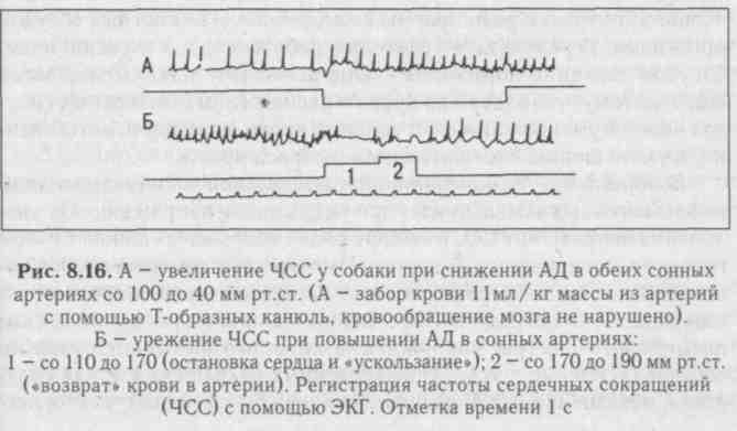 Нервная регуляции артериального давления