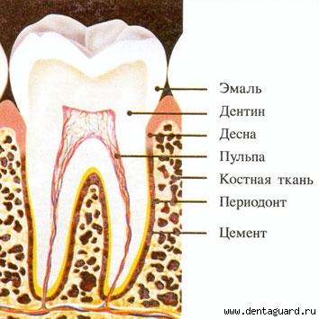 Ситуационные задачи по хирургической стоматологии с ответами key