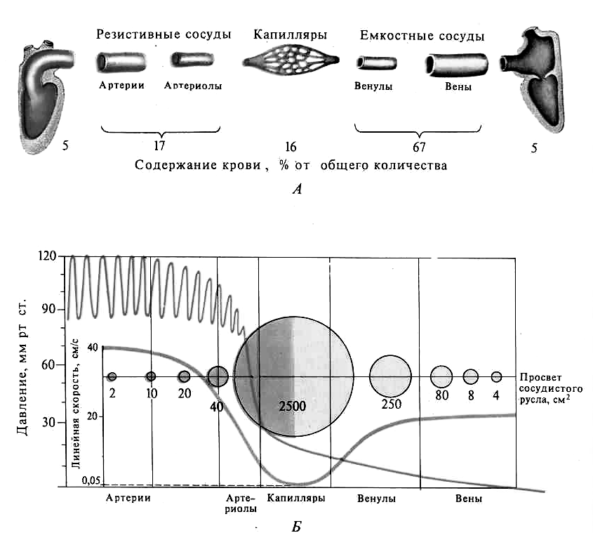 Физические закономерности движения крови в сосудистой системе реферат 7638