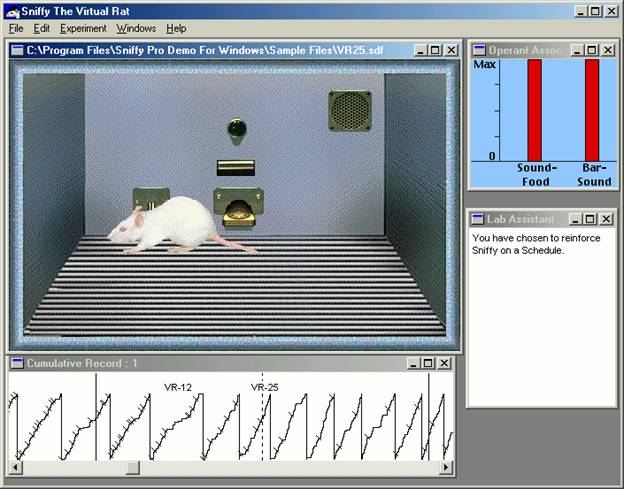 sniffy the virtual rat Sniffy the virtual rat go to sniffy exploring the psychology of learning sniffy the virtual rat, is a fun, interactive software program that gives undergraduate students a virtual laboratory experience without all the drawbacks of using a real laboratory rat.