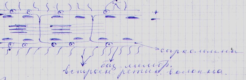 Муаровые структуры в цитологии