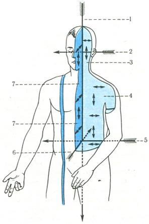 Плоскости тела и оси вращения в суставах мешочек с суставной жидкостью