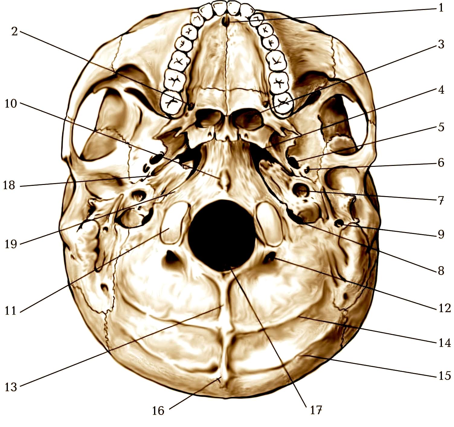объявления череп в картинках на латыни что разлука