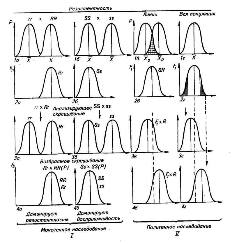 Генетические и цитологические последствия