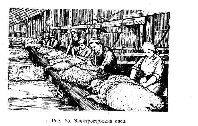 Гигиена пастбищного содержания овец