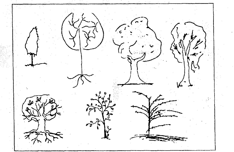 что психологические тесты рисунок дерево совсем знала его