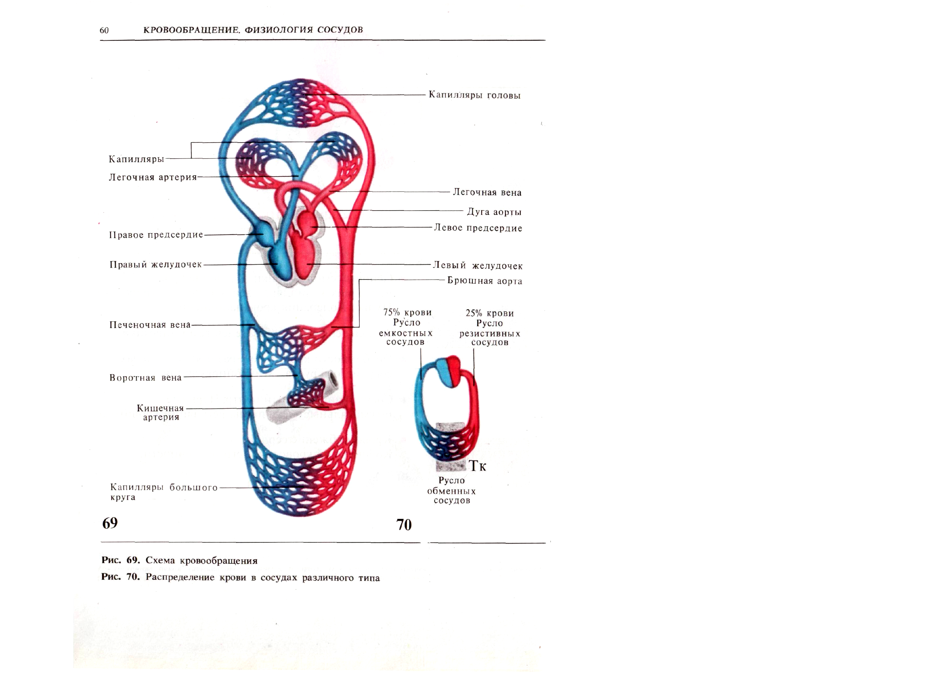 запрос схема кровообращения в картинках можно просто, легко