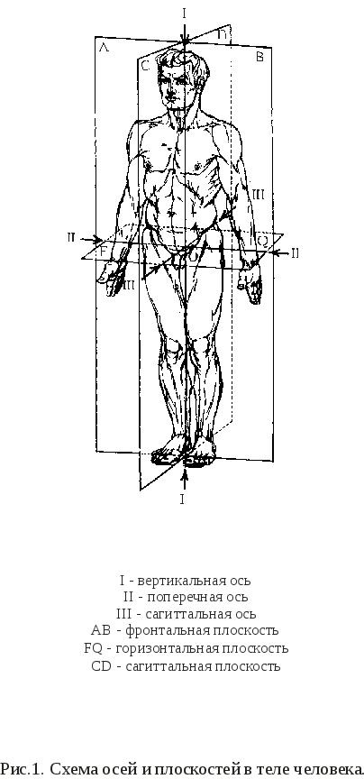 Плоскости тела и оси вращения в суставах сближенные скакательные суставы что делать