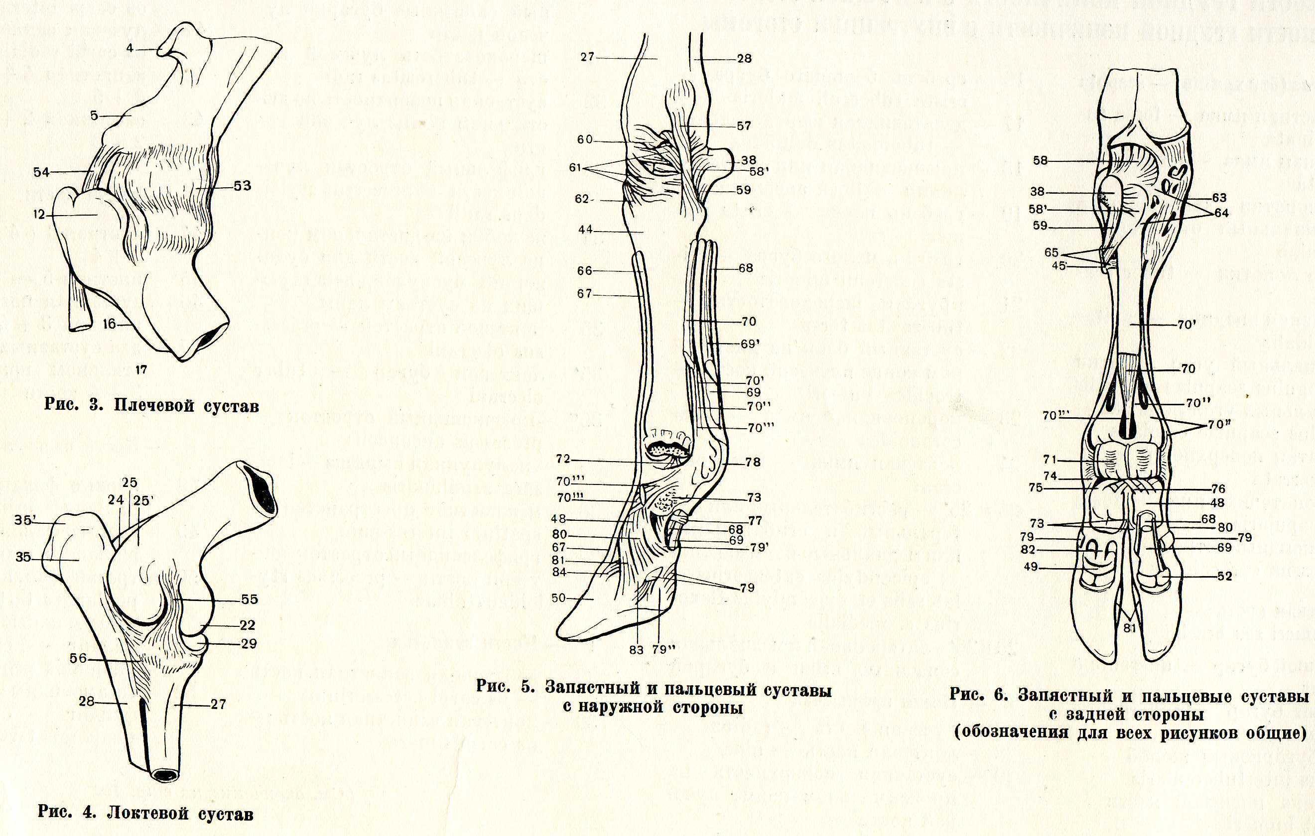 Проксимальный межфаланговый сустав пальца