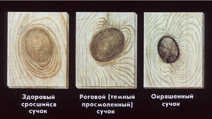 chastichno-srosshiesya-suchki