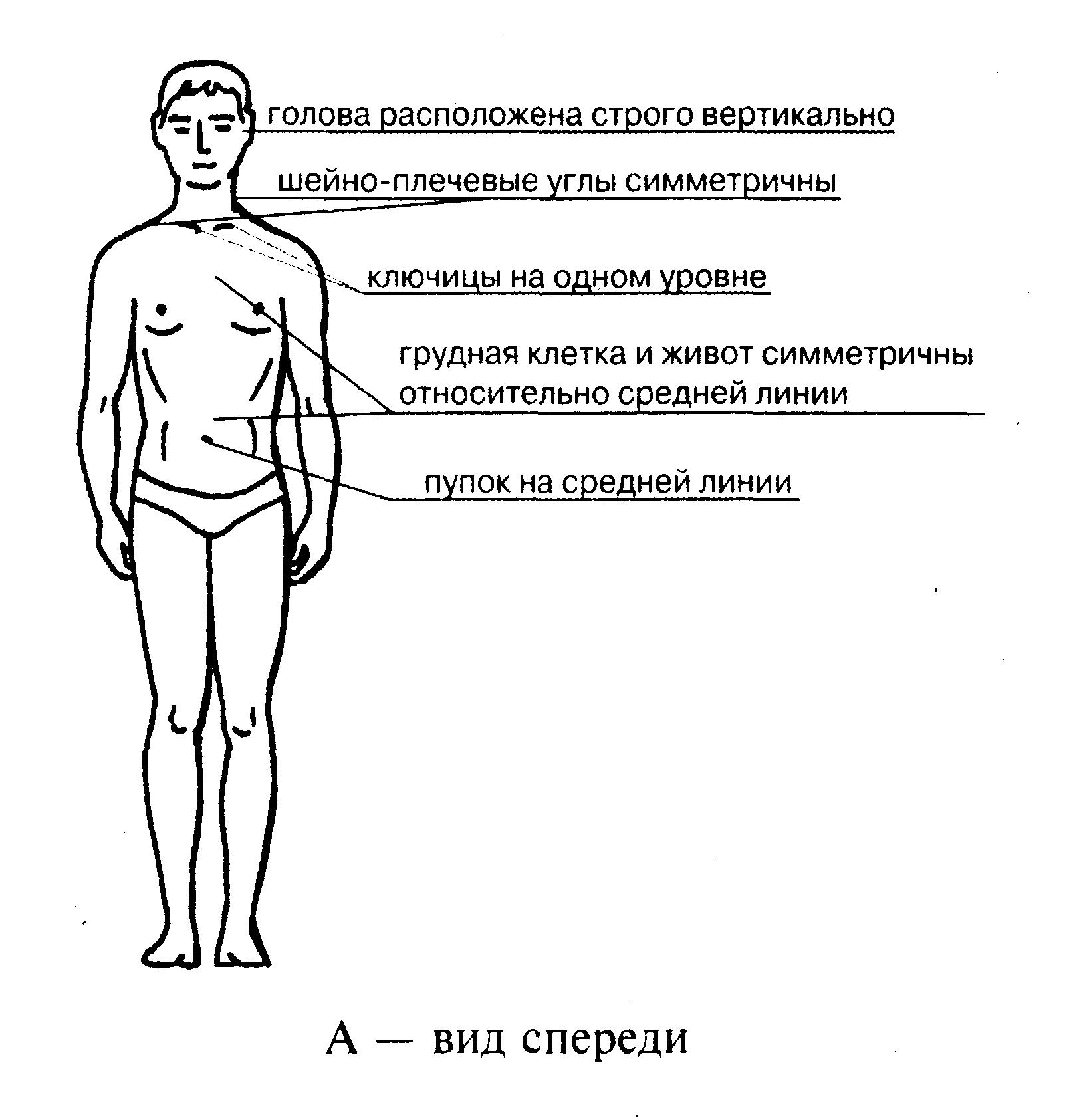 Осанка упражнения для укрепления | 1685x1623