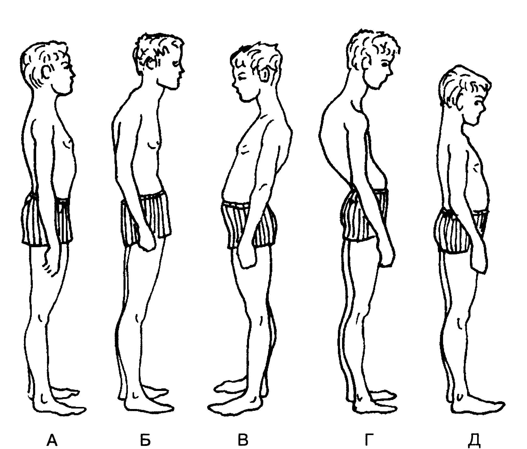 Основы методики оценки и коррекции телосложения реферат 5341