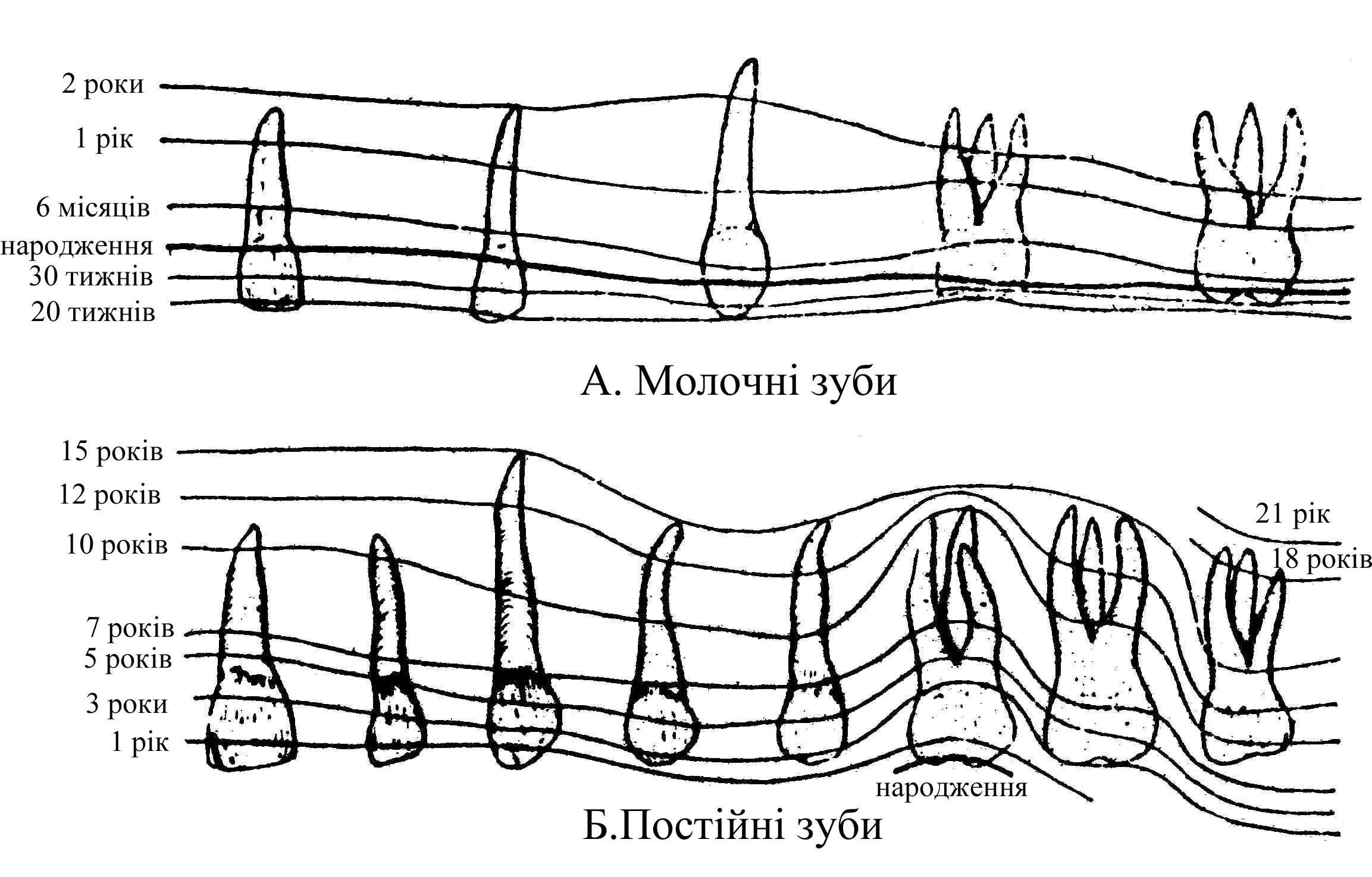 схема три нейронної рефлекторної дуги та її складові