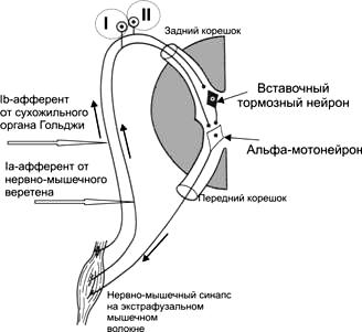 Рефлекторная дуга вкусового анализатора