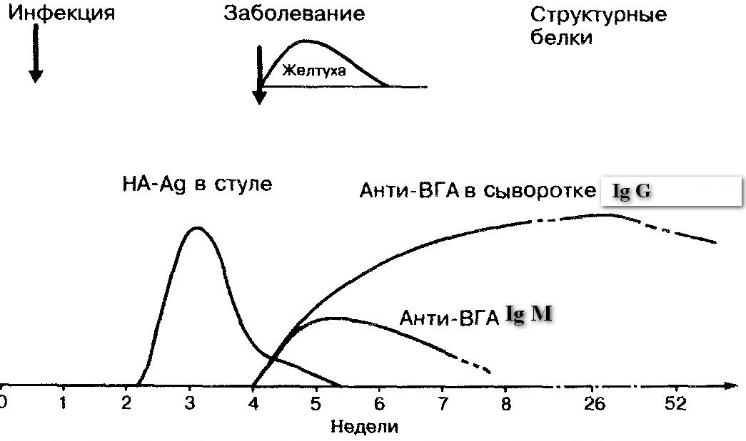 Сравнительная характеристика гепатитов в таблице