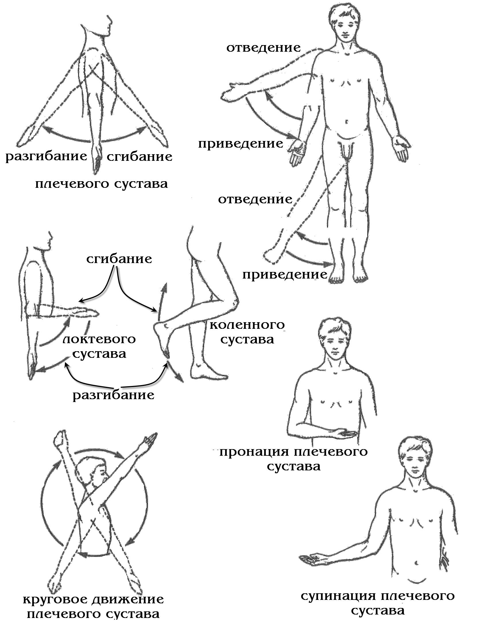 Строение и виды суставов их классификация виды движений в суставах бандаж на плечевой сустав и руку