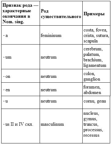 Имя существительное в латинском языке реферат 4898