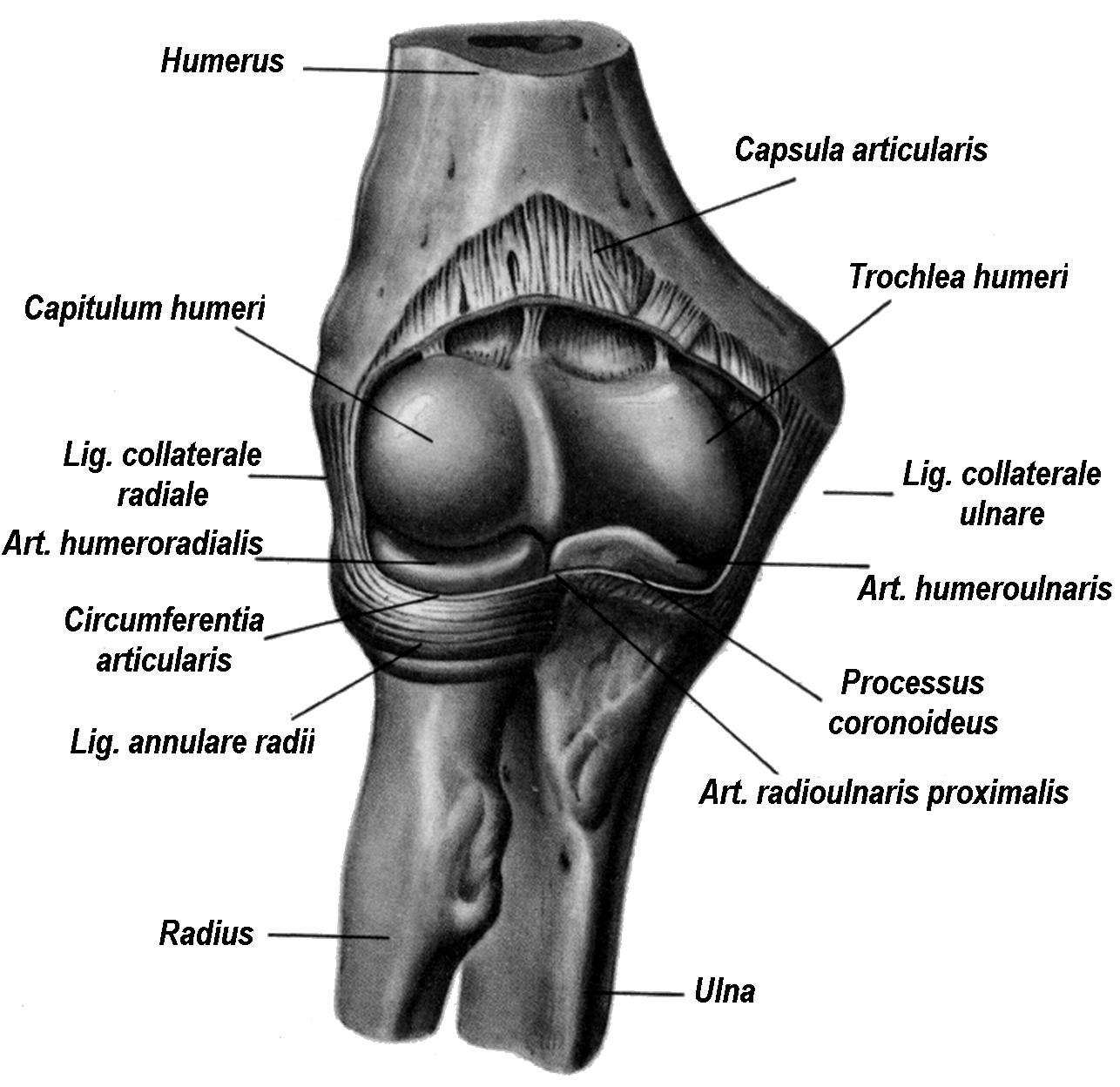 В образовании грудино ключичного сустава принимает участие воспаление лицевого сустава лечение