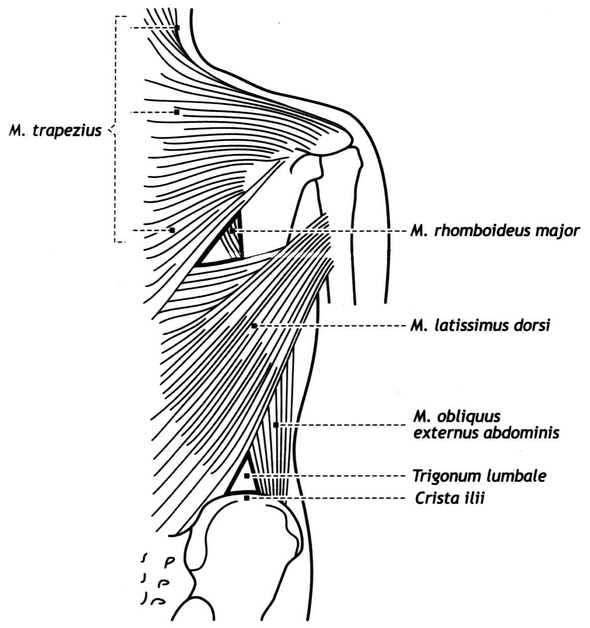 Подтаранный сустав анатомия - Все про суставы