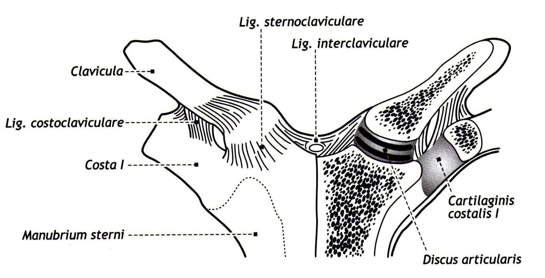 Оси движения акромиально-ключичного сустава версан флюид для суставов инструкция по применению