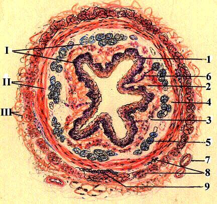 Кровоснабжение небных миндалин