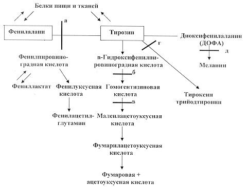 Нарушения обмена нуклеопротеидов реферат 9695