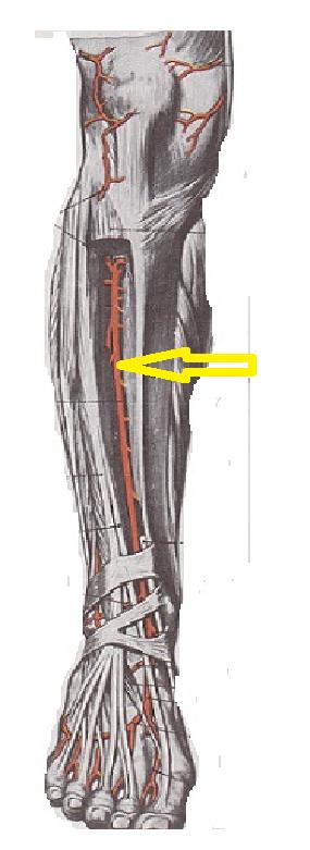 articulațiile de pe brațe și picioare doare
