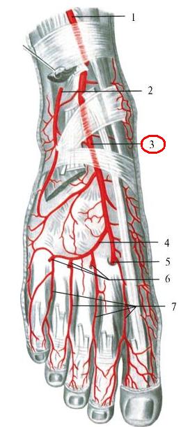 fenomene inițiale de artroză a articulațiilor arcuite