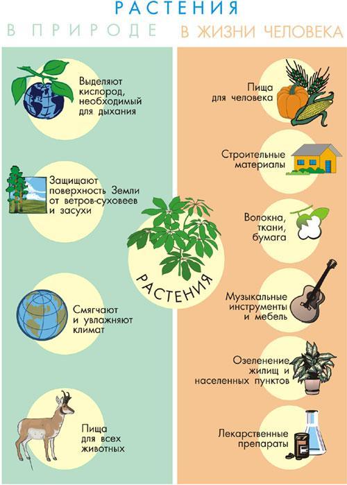 Реферат на тему значение растений в природе 6371