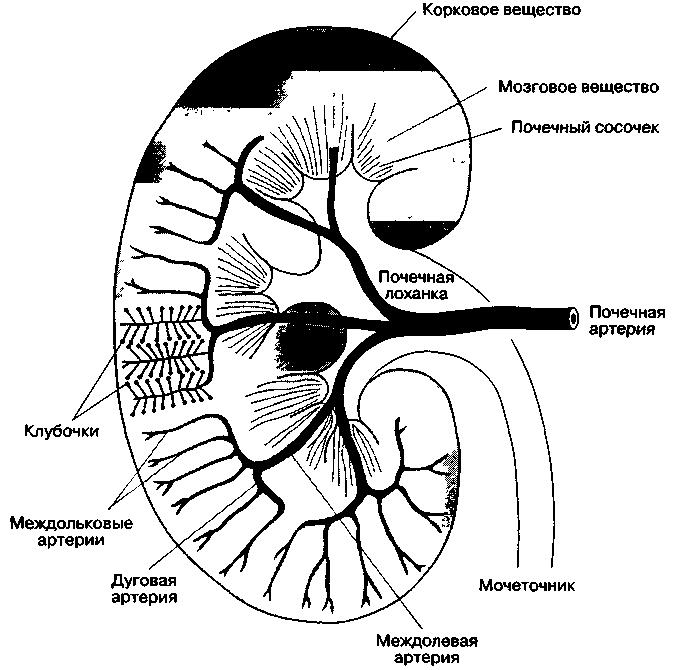 Инструкция. Препараты антагонисты альдостерона