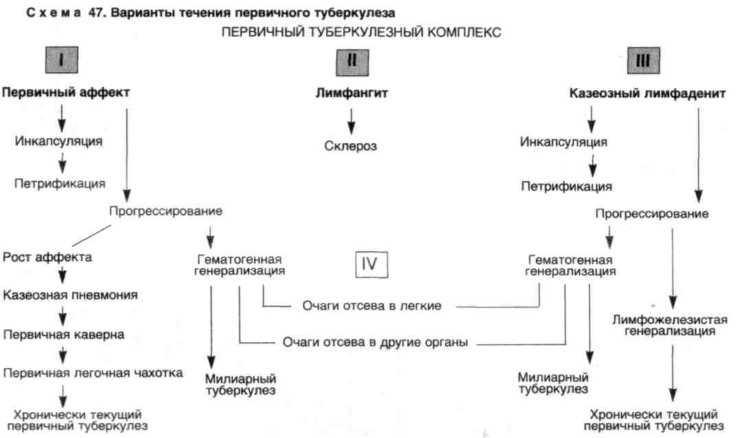 Патологическая анатомия туберкулез реферат 8947