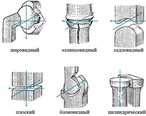 Простой сустав примеры сколько суставов в организме человека