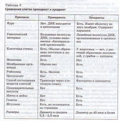 Различия и сходства яйцеклетки и сперматозоида