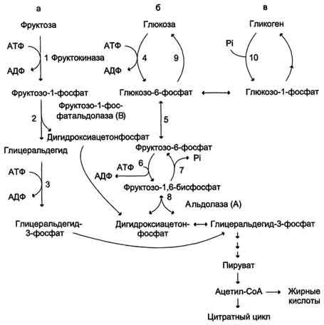 Реферат по биохимии метаболизм 1854