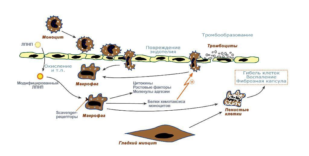Таг это биохимия