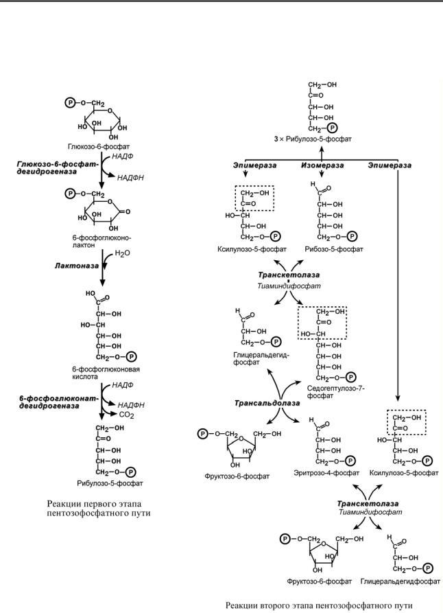 Пентозофосфатный путь окисления глюкозы реферат 6116