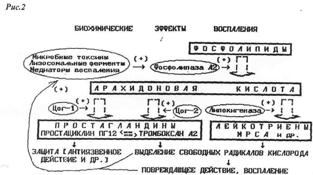 Механизм действия нестероидных противовоспалительных средств
